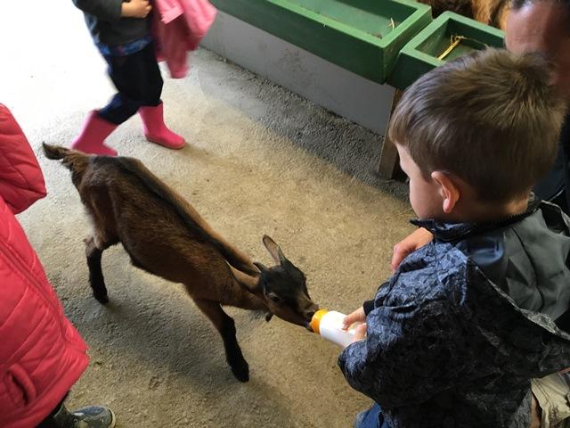 PS/MS A & MS B : Visite de la chèvrerie de Baradozic