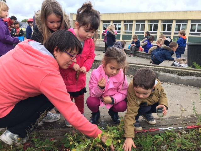 Maternelle : Nettoyage du potager
